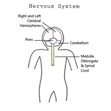 N system